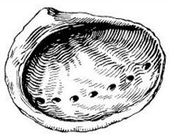 Free Abalone Shell Clipart.