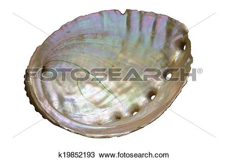 Abalone Illustrations and Stock Art. 31 abalone illustration and.