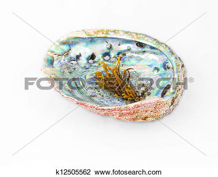 Stock Photo of Red abalone shell with pearlwort on top k12505562.
