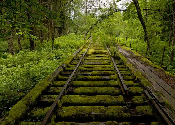 Nature Reclaims Abandoned Train Tracks in Washington State. [ 898.