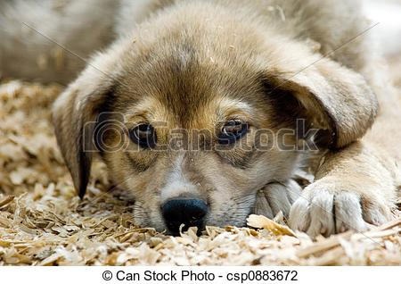 Puppy abandoned Stock Illustrations. 45 Puppy abandoned clip art.