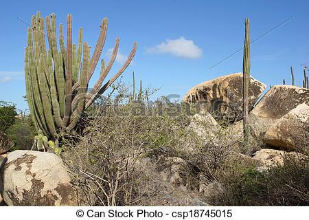 Stock Photography of Vegetation of Aruba, ABC Islands.