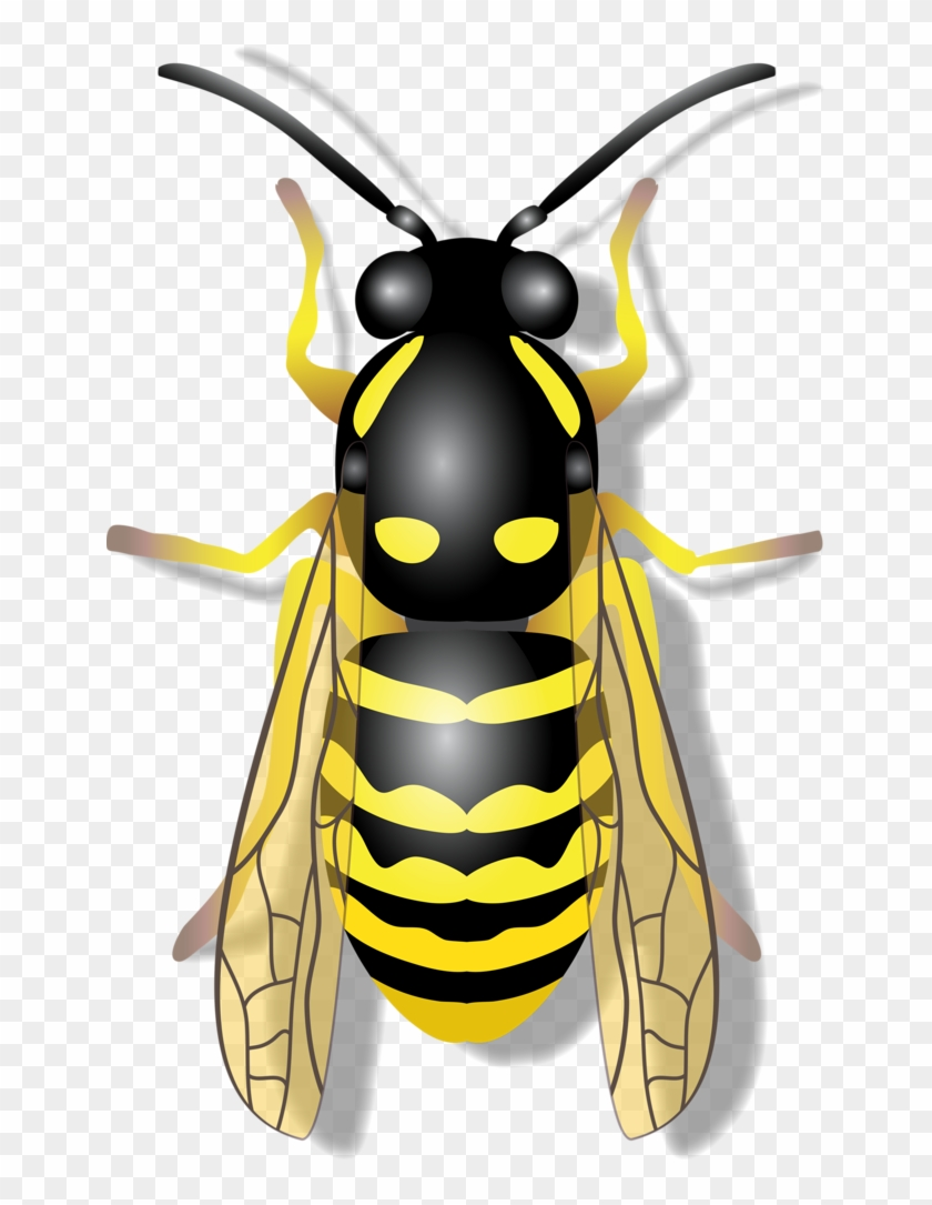 Flying Insects, Bugs And Insects, Clipart, Coloring.