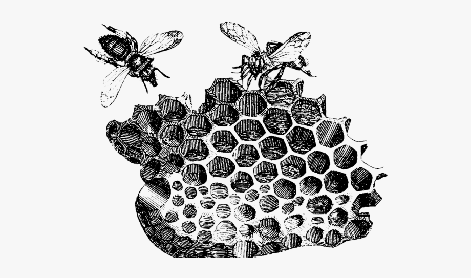 Bees Clipart Vintage.