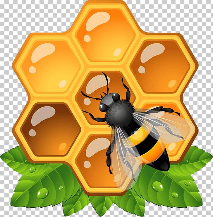 Miel de abeja insecto panal, colmena PNG Clipart.