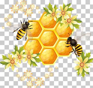Ilustración de miel, panal de abejas, abejas y miel. PNG.