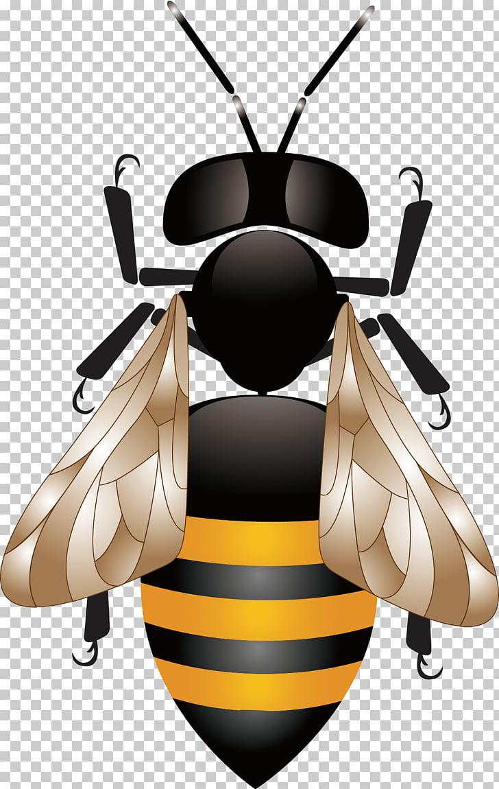 Miel de abeja panal colmena, abeja PNG Clipart.