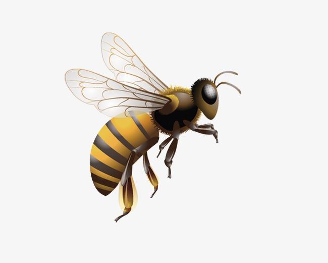 Una Abeja, Bee, Volar, Animal Imagen PNG para Descarga gratuita.