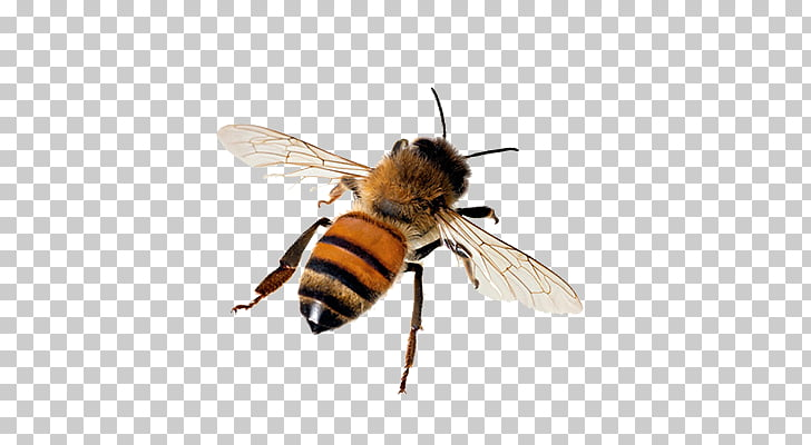 Abeja PNG Clipart.