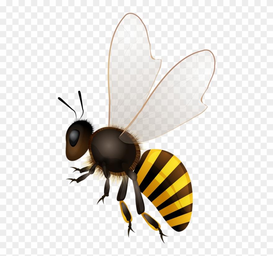 Clip Download Abeilles Abeja Abelha Png Bees Pinterest.