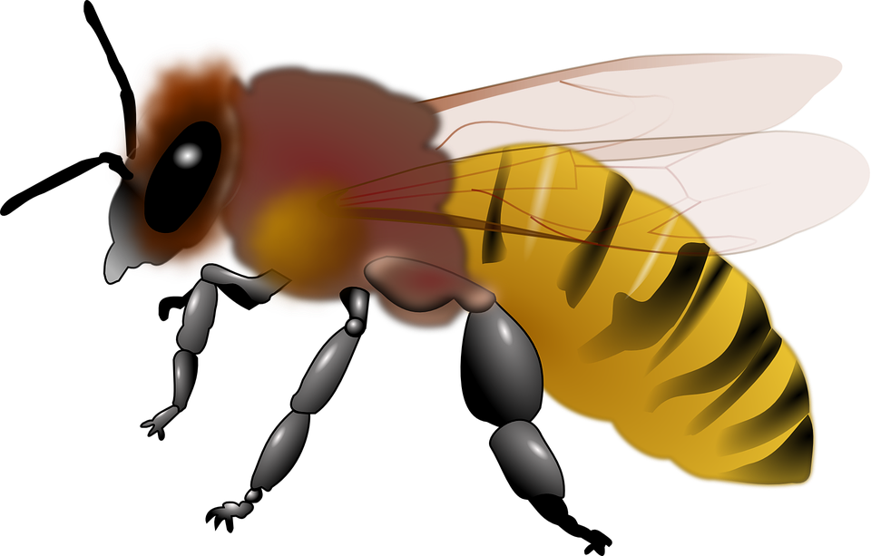 HD Animales, Abeja, Miel, Insectos.
