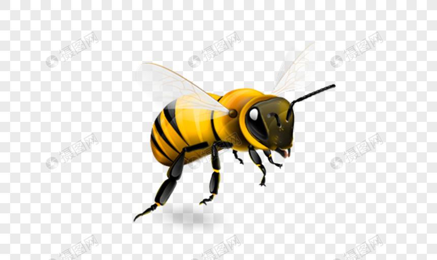 abelha Imagem Grátis_Gráficos Número 400403529_png Formato Imagem_pt.