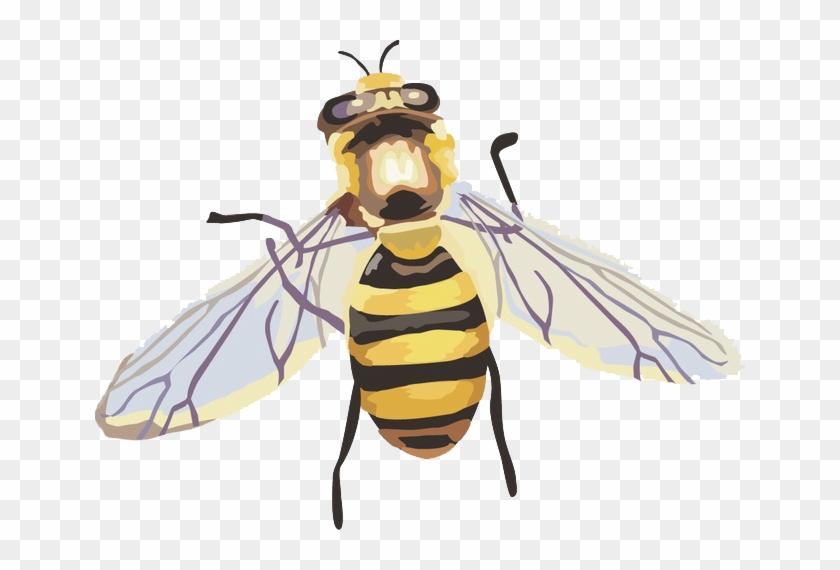 Hornet Png Image File.