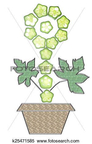 Stock Image of Cross section of Abelmoschus esculentus arranged in.