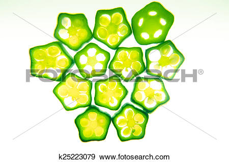 Stock Photograph of Cross section of Abelmoschus esculentus, Lady.