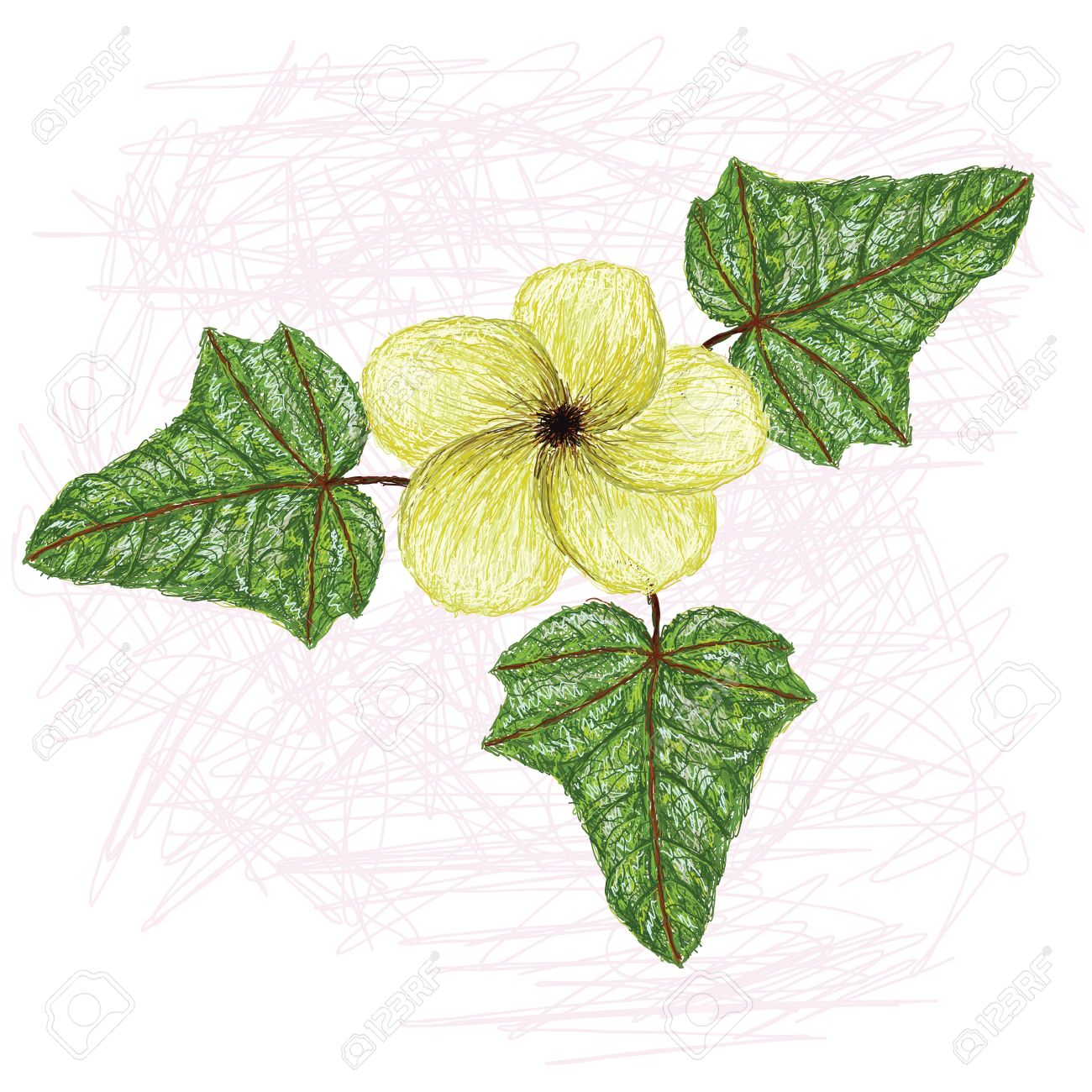 Illustration Of Edible Lagikway Leaves And Flower Scientific.
