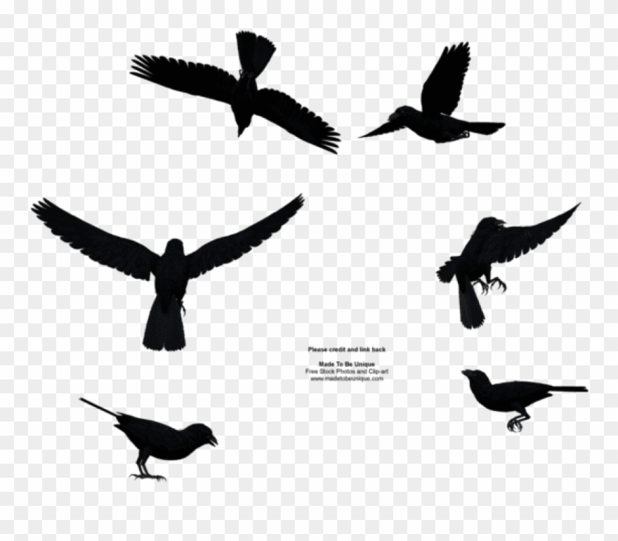 Free Png Download Bird Flying From Above Png Images.