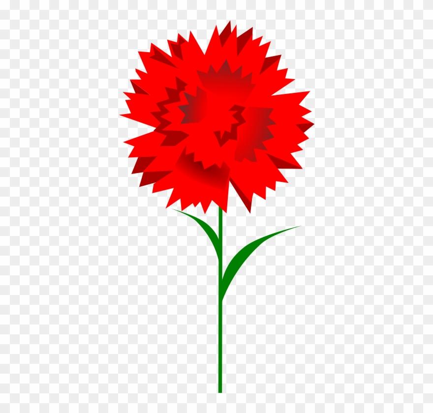 Free Carnation.