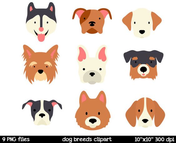 Dog Breeds clipart Dog Face Clipart Husky Clipart by SorbetBox.