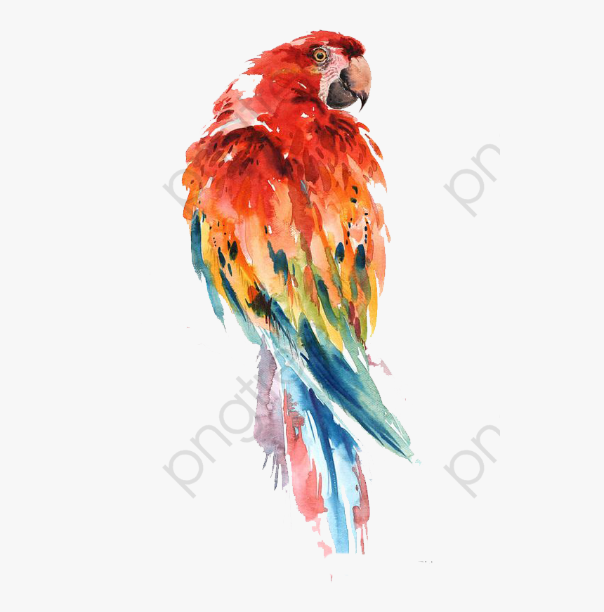 Parrot Clipart Abstract.