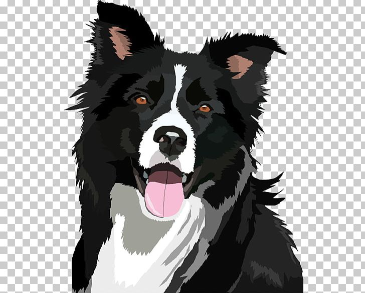 Border Collie Bearded Collie PNG, Clipart, Animals, Bearded.