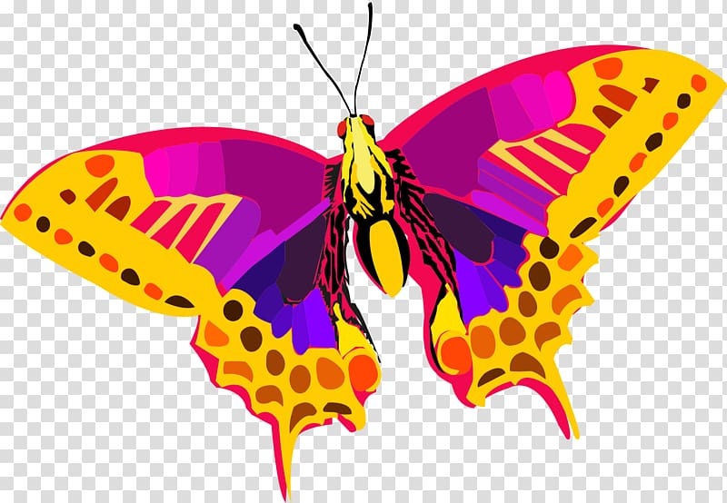 Butterfly , Abstract Colors HD transparent background PNG.
