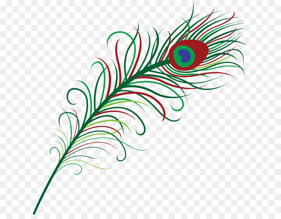 576 Peacock Feather free clipart.
