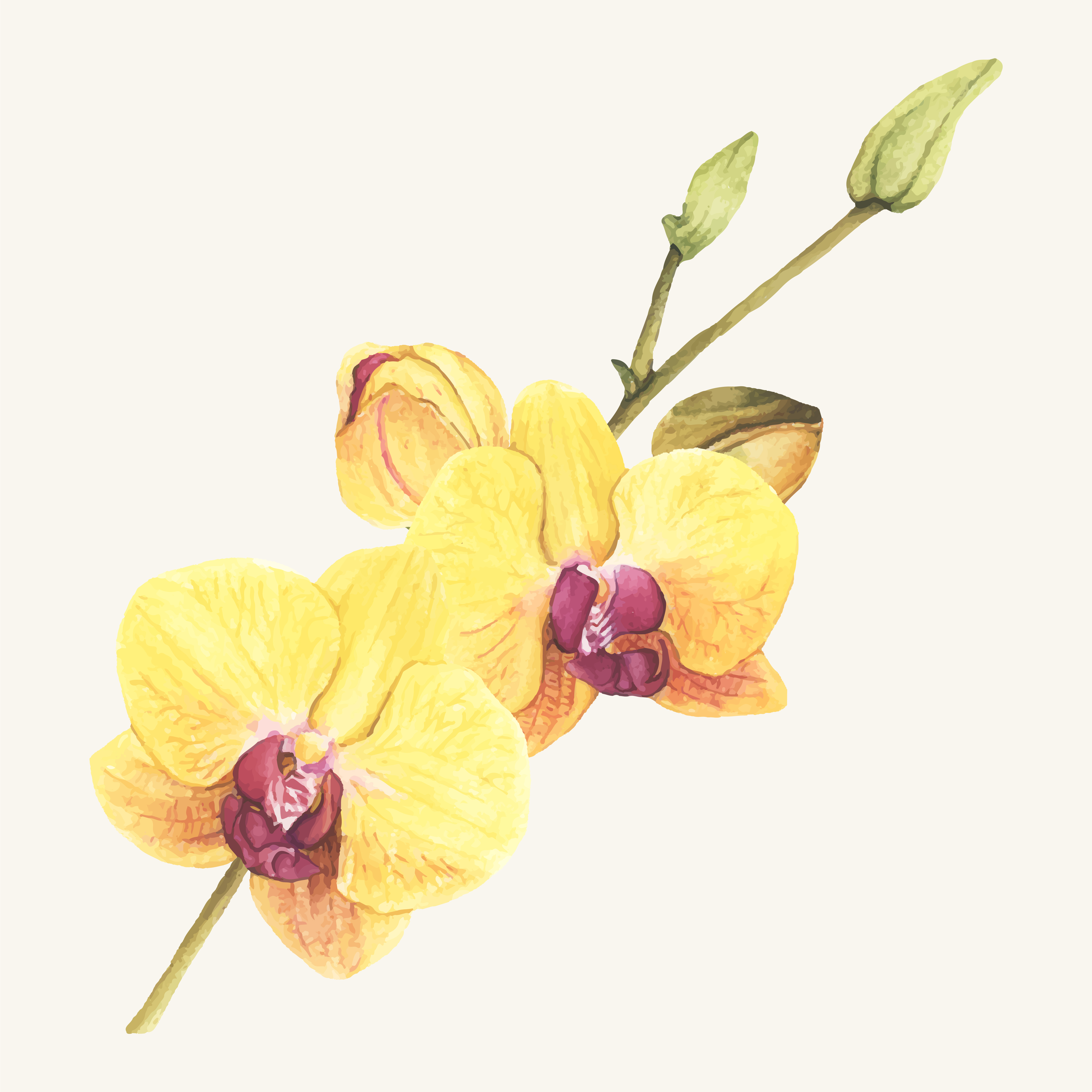 Watercolor Orchid Free Vector Art.