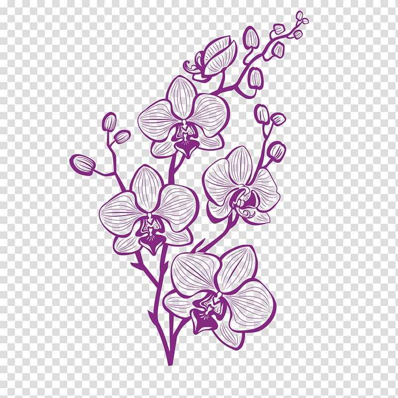 Purple moth orchids illustration, Hand painted purple orchid.