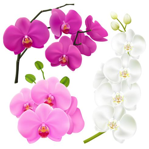 Orchid Flowers Realistic Colorful Set.