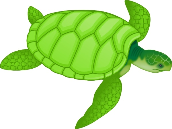 Green Sea Turtle clip art Free vector in Open office drawing.