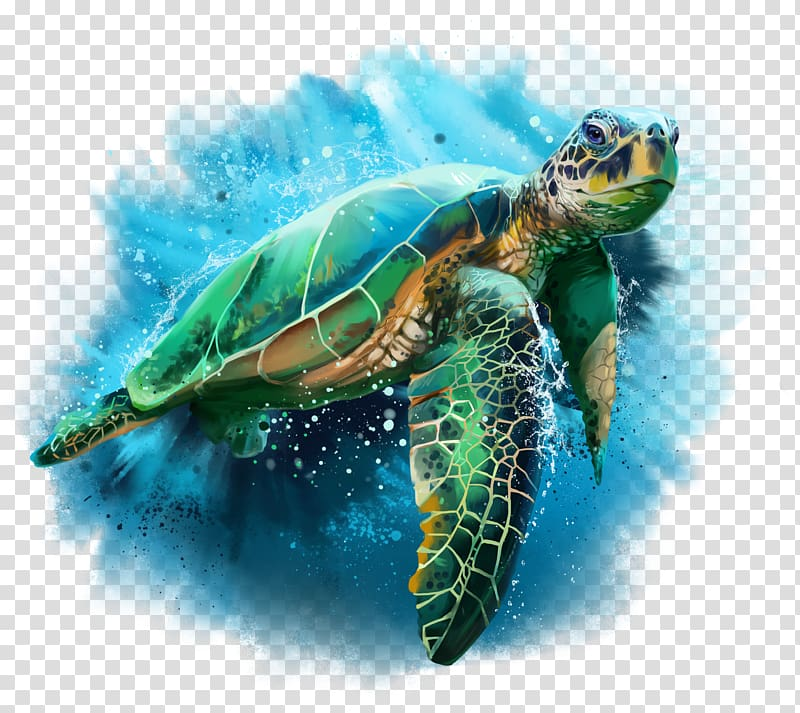 Green and brown turtle illustration, Turtle Drawing.