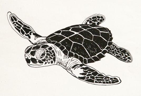 black and white turtle clip art.