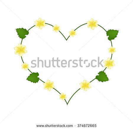 Abutilon Flower Stock Photos, Royalty.
