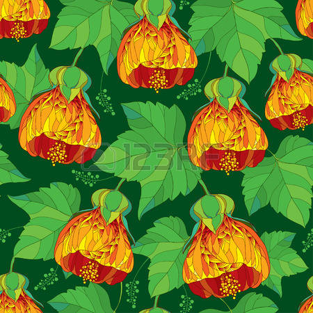 73 Abutilon Stock Vector Illustration And Royalty Free Abutilon.