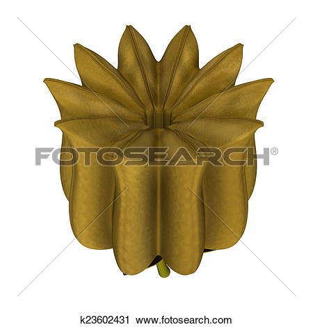 Clipart of Abutilon flower k23602431.