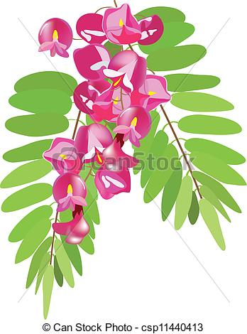 Vector Clip Art of acacia with leaves, acacia pink, acacia red.