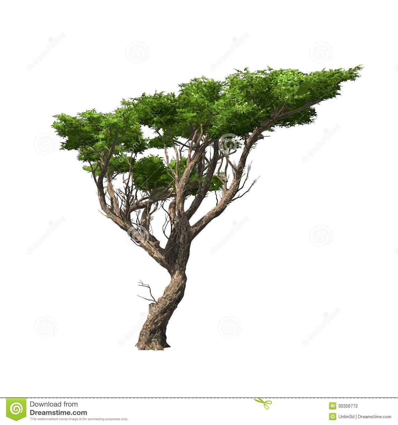 Acacia Leaves Clipart.