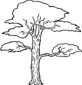 Acacia Clip Art.
