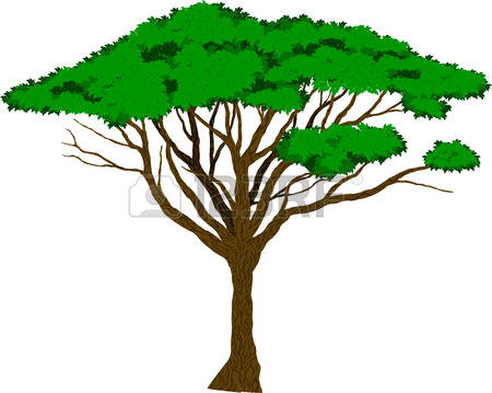 The best free Acacia silhouette images. Download from 57.
