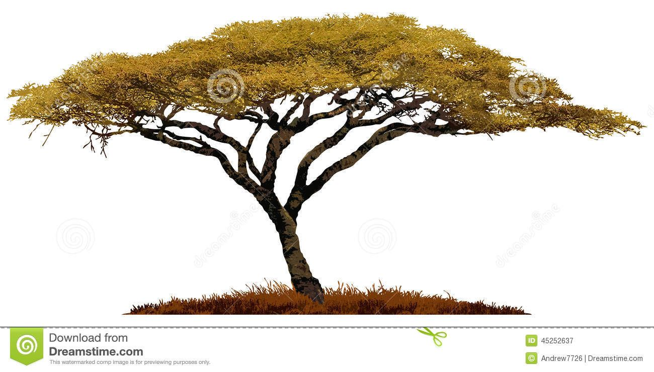 Acacia Tree In Africa Royalty Free Stock Photos.