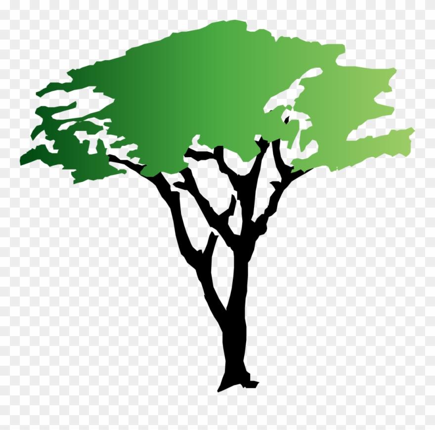 20 Acacia Tree Clip Art.