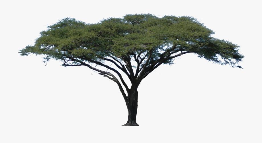 Tree Downloads Image.