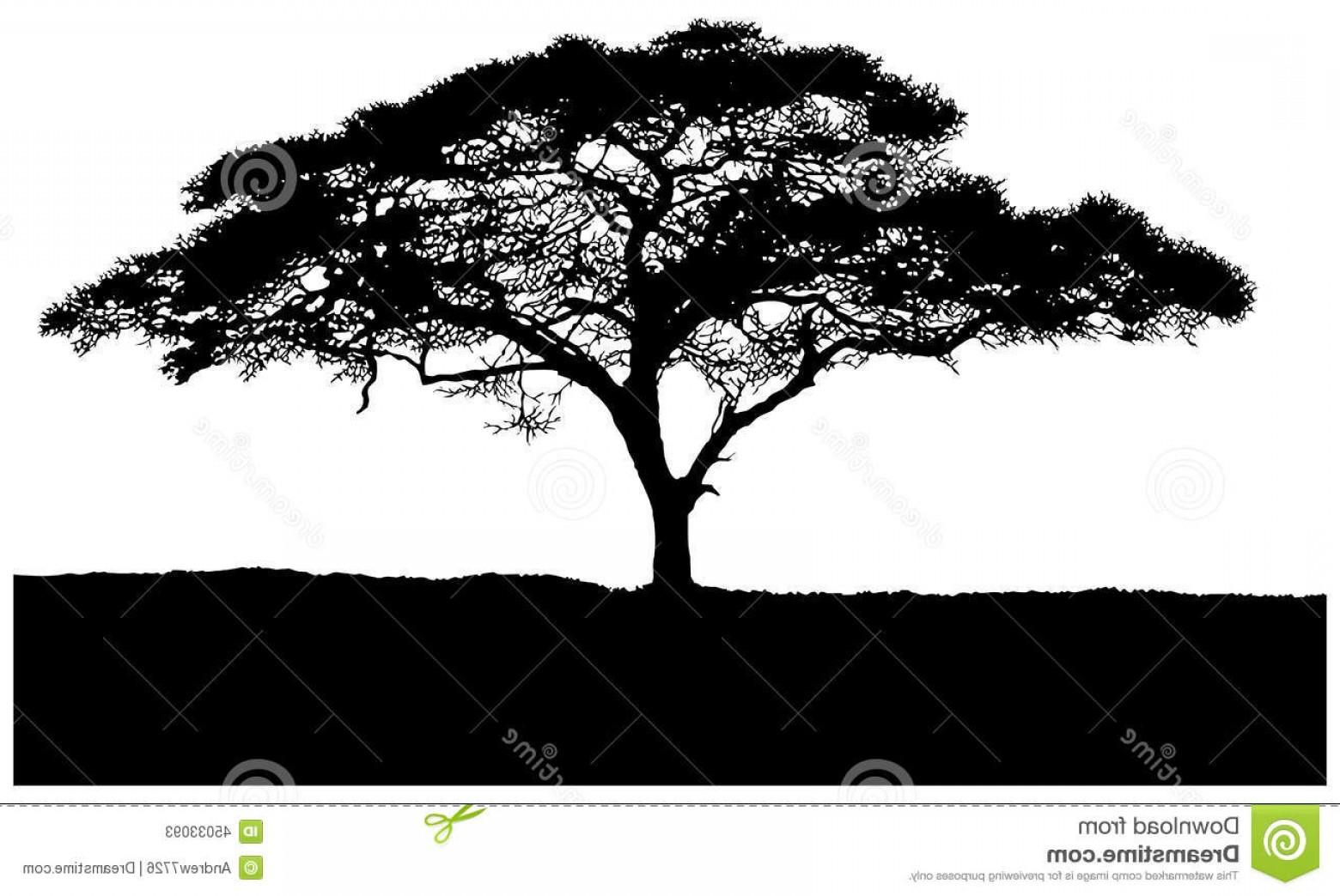 Acacia Tree Vector at GetDrawings.com.