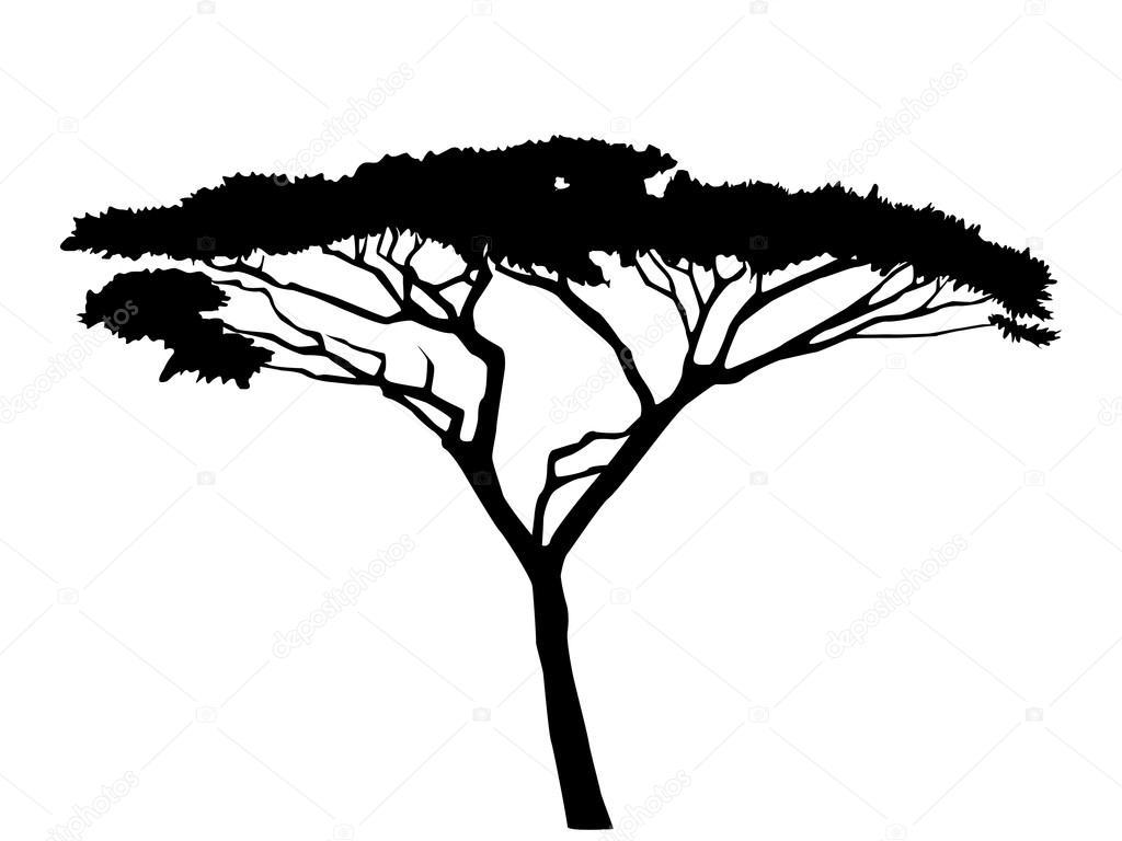 Acacia Tree Silhouette.