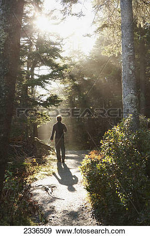 Stock Photograph of Walking in sunlight in a forest, Acadia.
