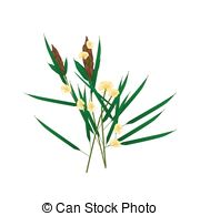 Acanthaceae Illustrations and Stock Art. 18 Acanthaceae.