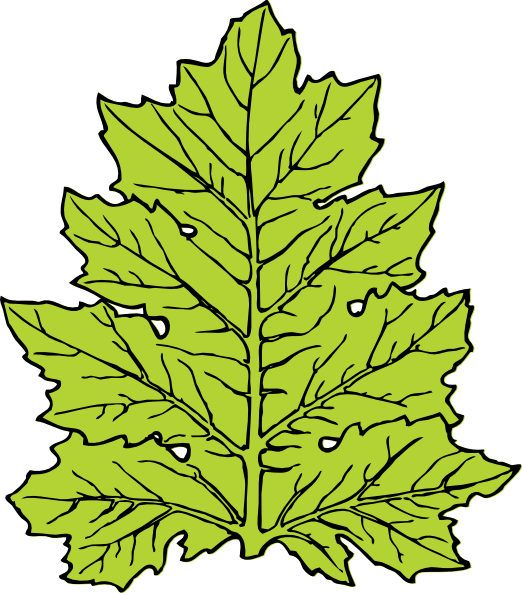 Acanthus Leaf clip art Free Vector / 4Vector.