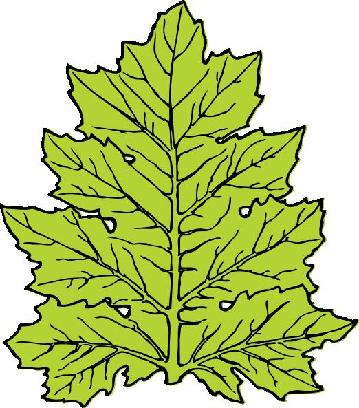Acanthus Leaf clip art Free Vector / 4Vector.