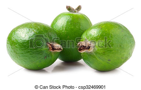 Stock Photography of Tropical fruit feijoa Acca sellowiana.